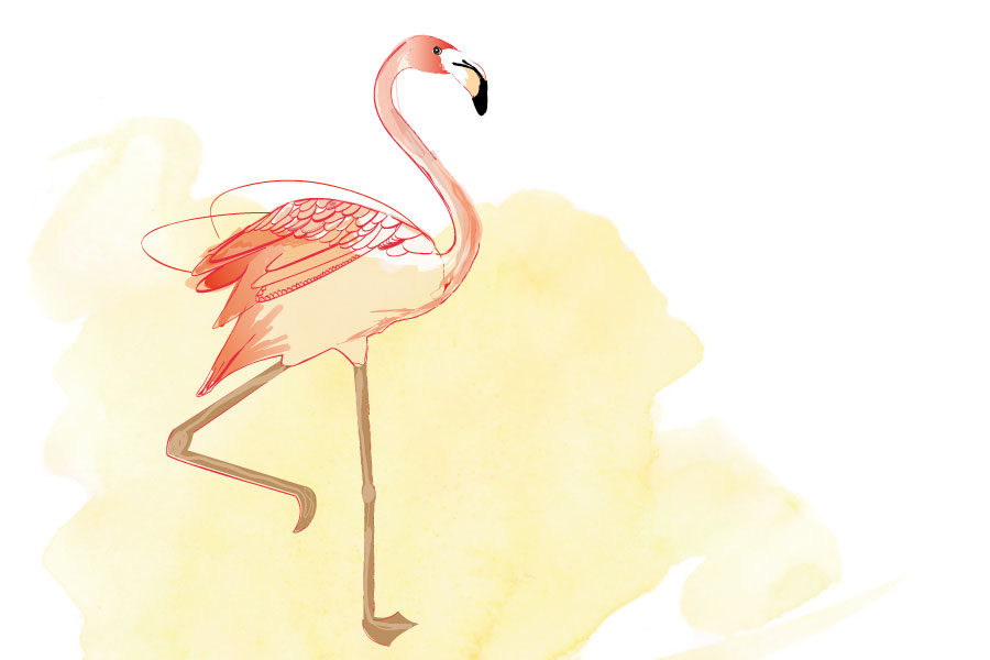 illustration-flamant-rose