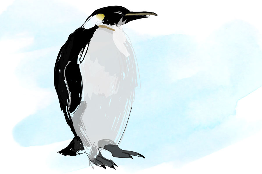 illustration-pinguin
