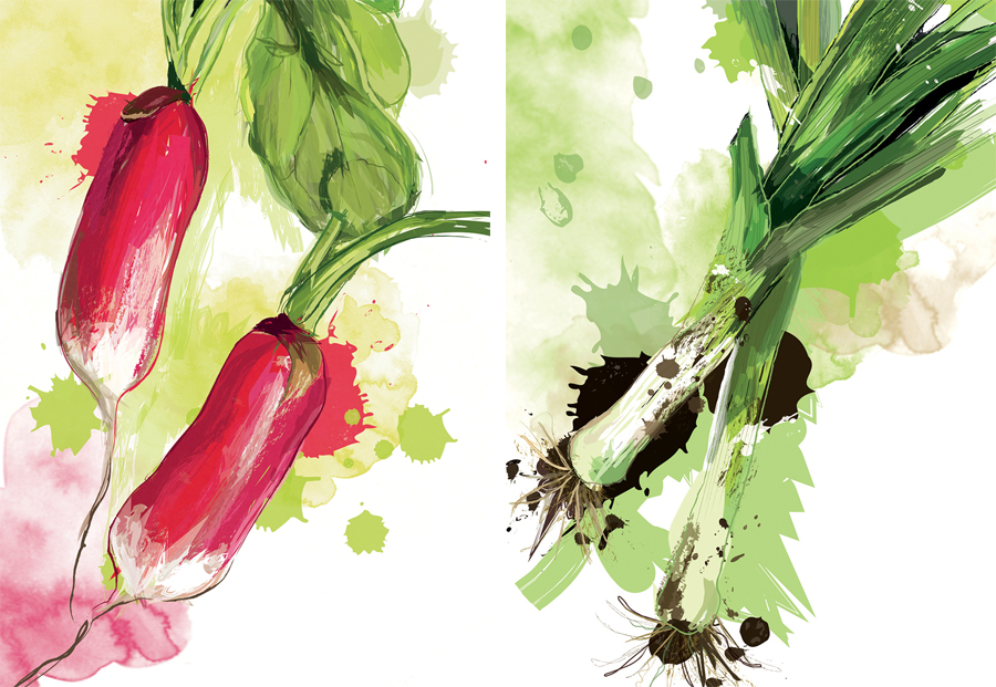 illustration-legumes